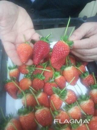 Strawberry, tomato